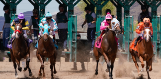Racehorses coming out of gate