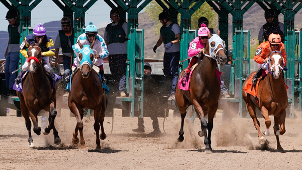 Racehorses coming out of gate - Study to Prevent Racehorse Injuries