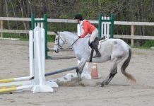 Horse Refusing Jump