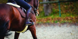 Horse with rider. Close up of stirrup.