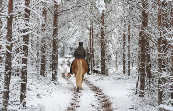 Riding on a Snowy Trail