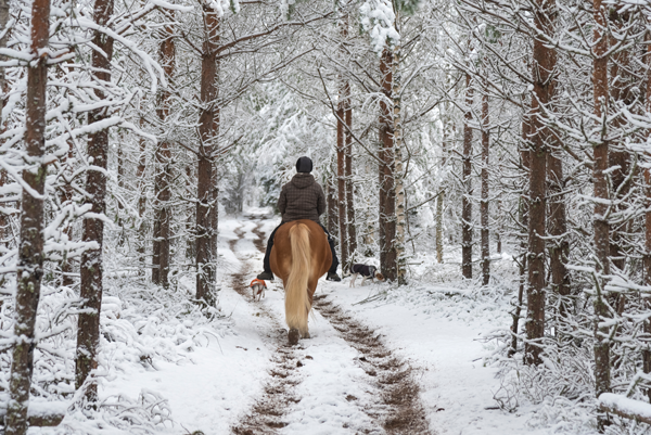 Riding on a Snowy Trail - Trail Riding in Adverse Weather