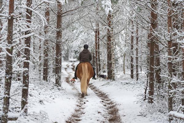 Winter Horseback Riding on a Snowy Trail