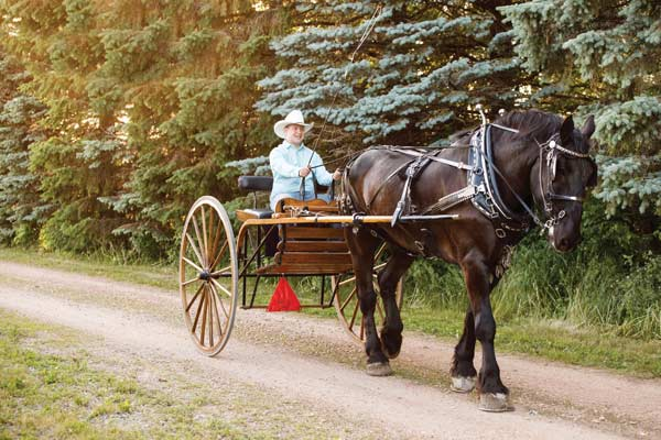 Rilee Klaers and Cole, a Percheron driving horse