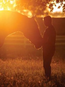 Silhouette - youth and Percheron