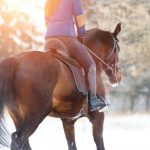 Riding horse in winter.