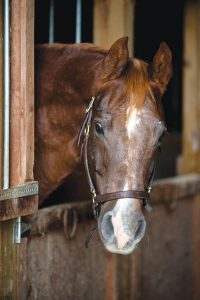 Horse in barn stall.