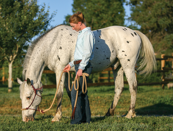 Senior Appaloosa Horse