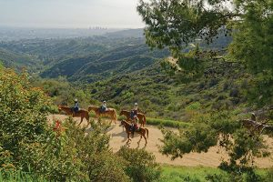 Horses on trail to Hollywood sign in Los Angeles.