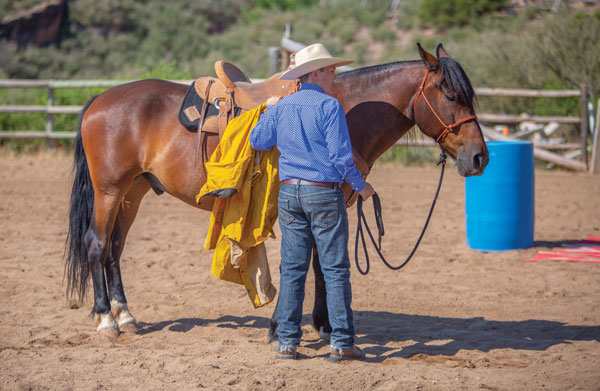 Desensitization Training with a Jacket