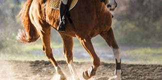 Spring Conditioning Your Horse - Horse Legs