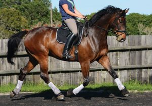 Spring Conditioning - Trotting Horse