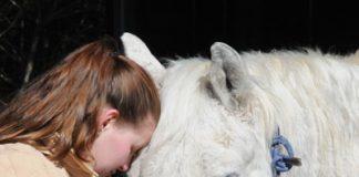 Snotty nose sick horse - Strangles