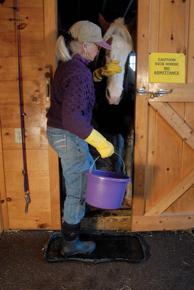Quarantine for a sick horse