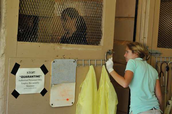 Quarantine for Strangles