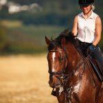 Summer Horse Health - Sweaty Horse