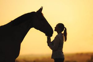 Rider and horse at sunset.