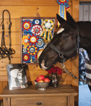 Add a touch of elegance to your tack room while keeping the barn tidy and clutter-free.