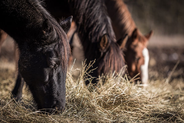 Horse Hay - Check Winter Supply