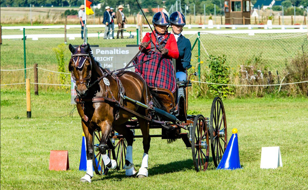 Tracy Bowman and Albrecht's Hoeve's Lars - 2021 FEI Para FEI Para Driving World Championship