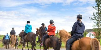 Trail Riding Emergencies