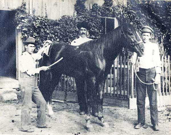 Traveler - American Quarter Horse