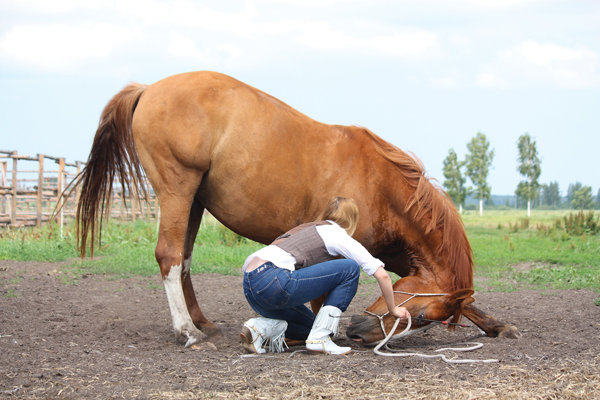 Trick training a horse