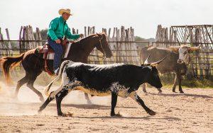 Horse Illustrated Podcast #1 - Van Hargis