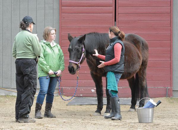 Senior Horse Vet Exam