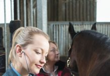 Vet Adventures - Listening for Colic
