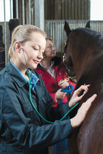 Vet Adventures - Listening for Colic in a Chaotic Life