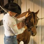 Teaching Horse to Work with a Veterinarian