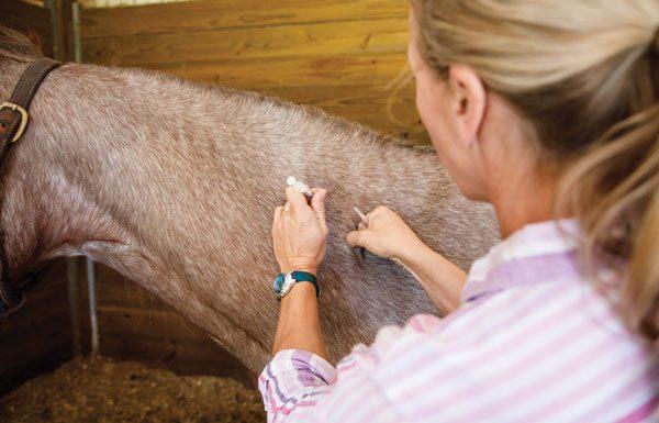 Veterinarian giving horse a vaccine.