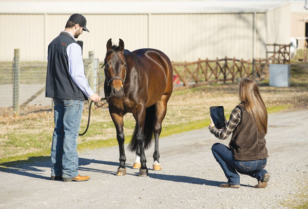 Woman taking smartphone pictures of horse for veterinarian.