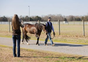 Woman taking smartphone video of horse while horse is being walked.