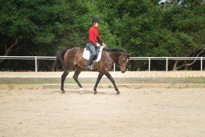 Walking horse over pole exercise.