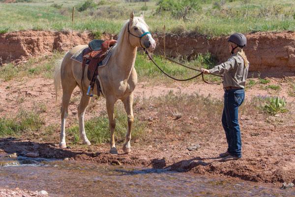 Horse balking at water