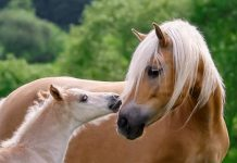 Webinar on Horse Breeds and Breed Registries