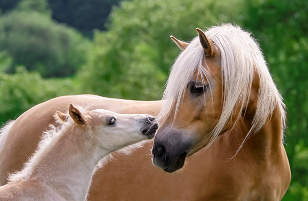 Webinar on Horse Breed Registries