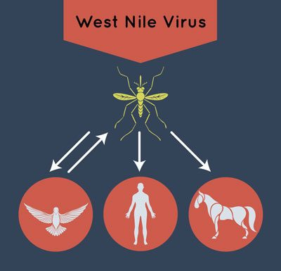 West Nile Virus Spread