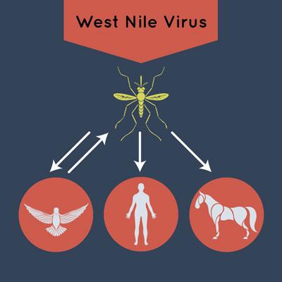 West Nile Virus Spread
