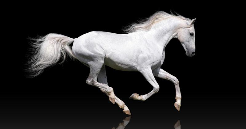 White Horse for Podcast