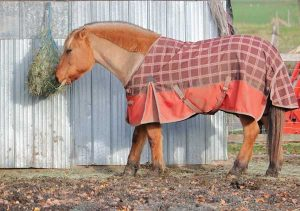 Horse with blanket in winter