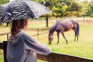 Horse in rain during winter