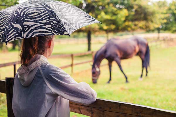 Horse in rain during winter / Poll Horseback Riding in Adverse Weather