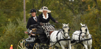 Yvette Harris and Suki and Morwell Amber - USEF Intermediate Pair Pony Combined Driving National Championship