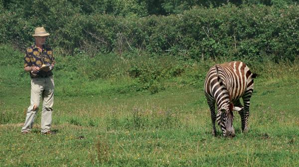 Zebra Stripes Effects on Flies