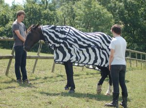 Testing Horse Sheets as Bug Repellent