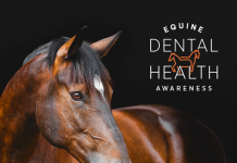 Zoetis Equine Dental Exams