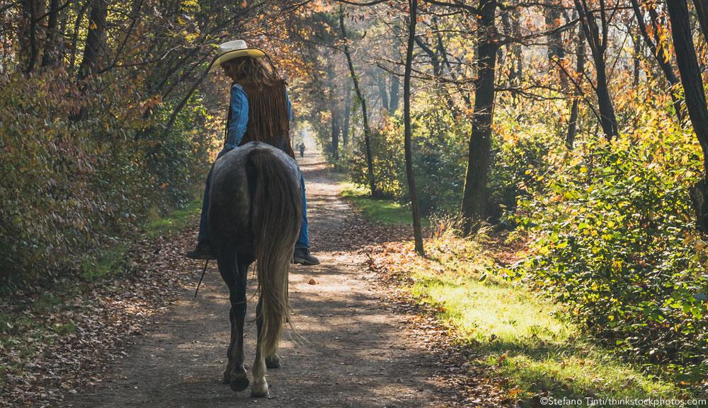 Appaloosa horse on a trail ride